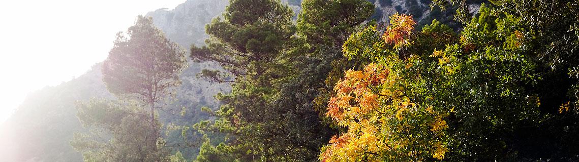 Territorio Sierra Espuña, agenda de actividades